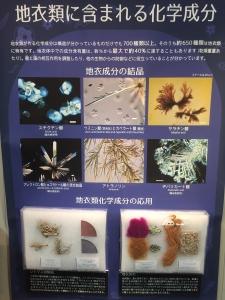 地衣類 藻類と共生した菌類たち-7