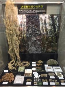 地衣類 藻類と共生した菌類たち-6