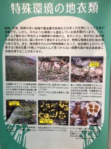地衣類 藻類と共生した菌類たち-11