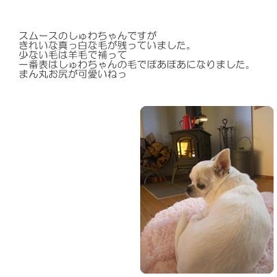 2018-2-dogfelt.jpg