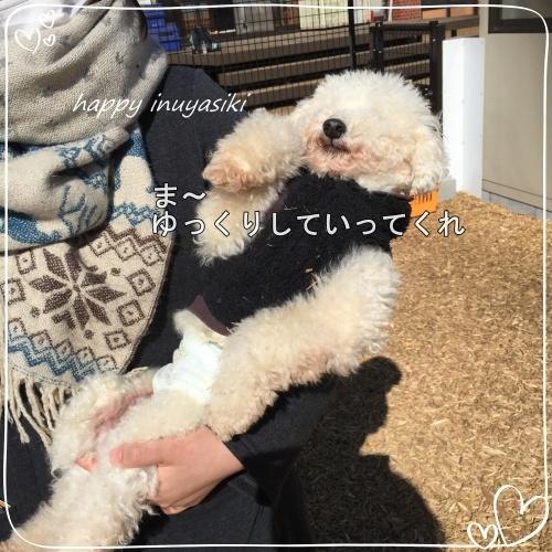 mini2017IMG_0613-2