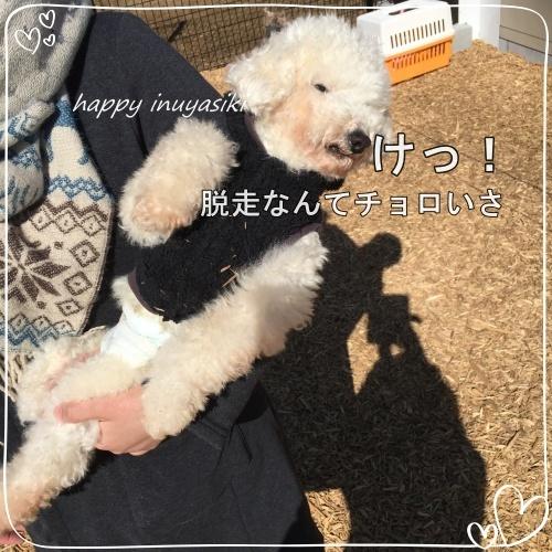 mini2017IMG_0615-2
