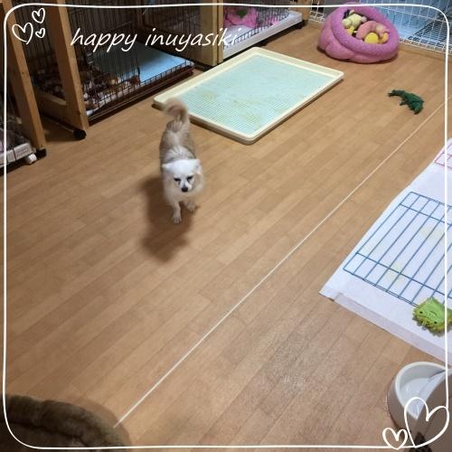 mini2017IMG_7812.jpg