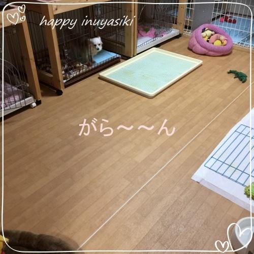 mini2017IMG_7814.jpg