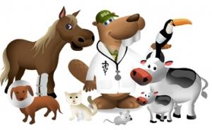 Bucky-Veterinary-Medicine225.jpg