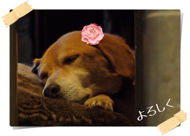 ミニバラを付けた誕生日犬