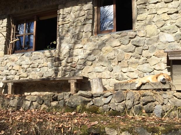 石積みの家、換気中と藁のベッドで寝る犬