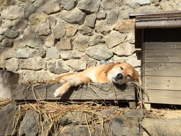 藁のベッドで寝る犬
