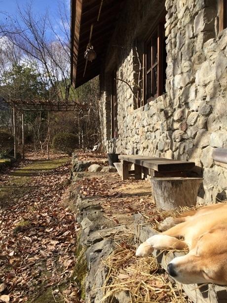 石積みの家の冬と藁の上で寝る犬