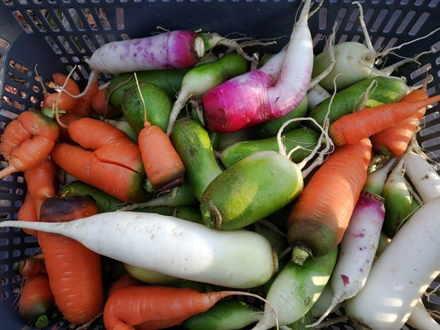 カラフルなとれたて野菜