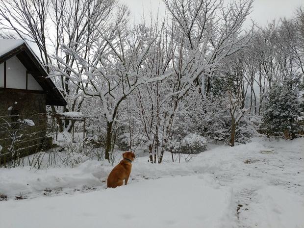 何かを眺める雪の日の朝