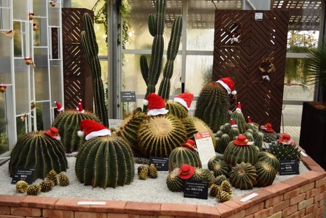 サボテンクリスマスweb
