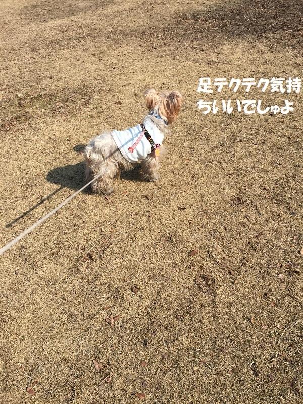 ロング散歩 025