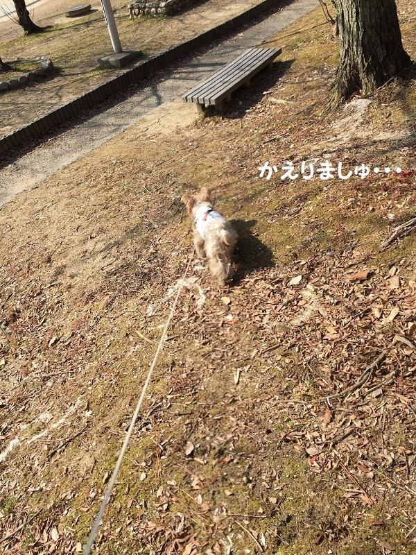 ロング散歩 041