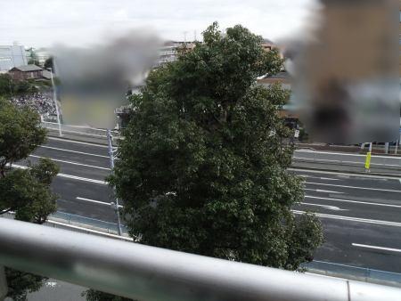 ムクドリの街路樹