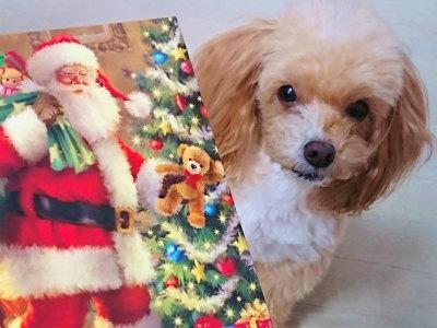 2017年クリスマスカード2
