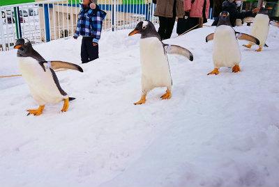冬の水族館5-crop