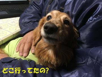 コストコ行き3