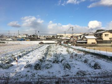 雪の農園6