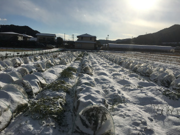 雪の農園7