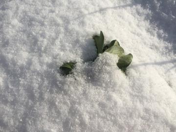 雪の農園10