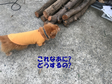 干支の犬出来た5