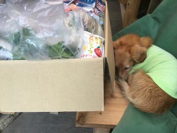 野菜を送るよ8