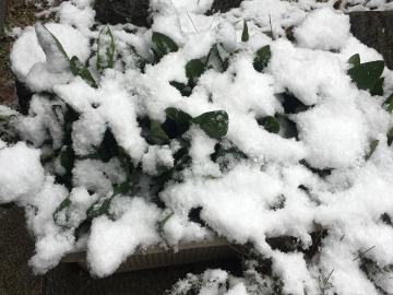 また雪が積もったよ2
