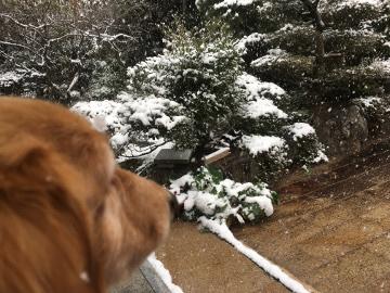 また雪が積もったよ3