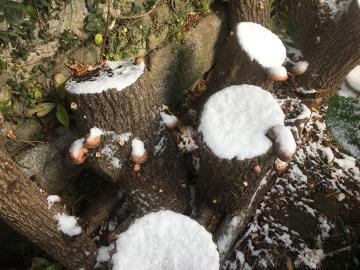 また雪が積もったよ8