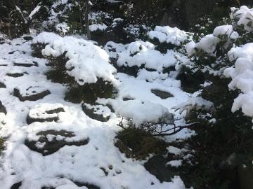 雪、畑はいっぱい2