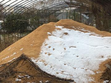 雪、畑はいっぱい4