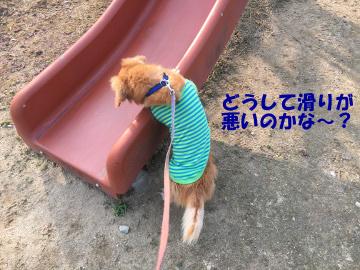 到津の森公園10