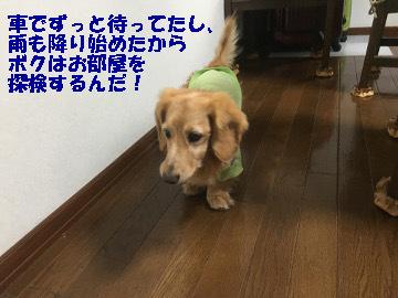 ひいばあちゃん6