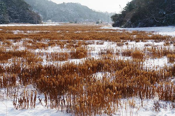 奥松島の畑の雑草
