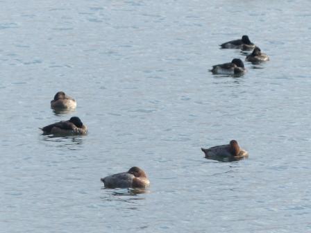 水鳥たち 3