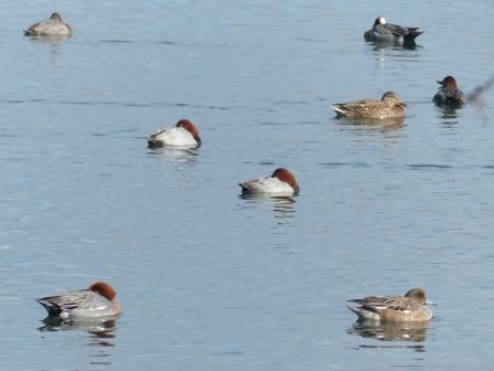水鳥たち 2