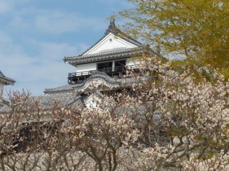 梅と松山城 1
