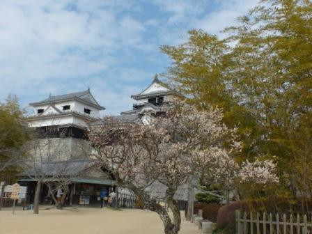 梅と松山城 2