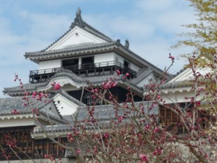 梅と松山城 5