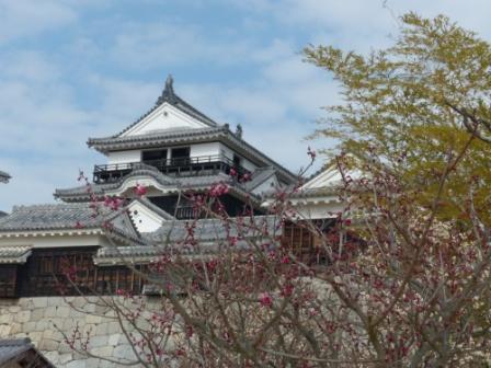 梅と松山城 4