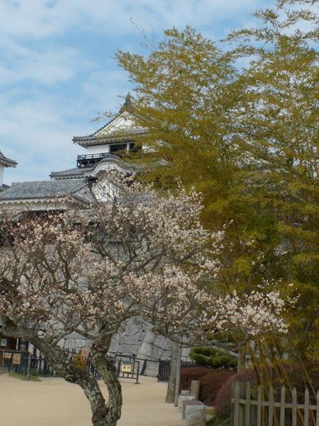 梅と松山城 3