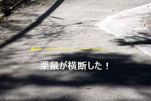 IMG_3769_.jpg