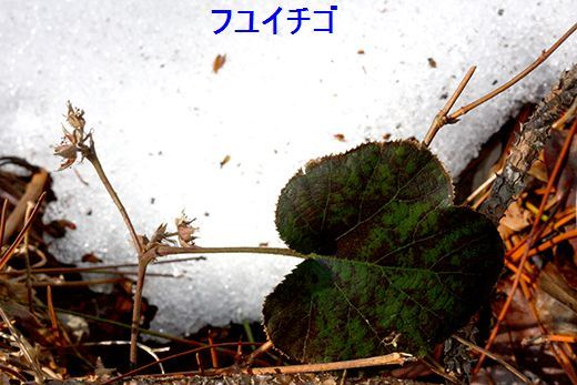 IMG_5648_.jpg