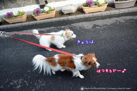 170109_yosino1.jpg