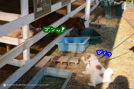 171121_awaji9.jpg