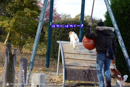171201_fureai15.jpg