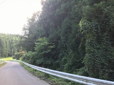 道路西側の遺跡指定範囲の南端あたり