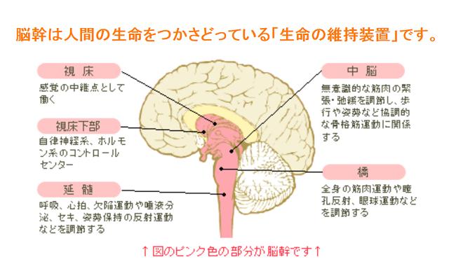 脳幹の解説図