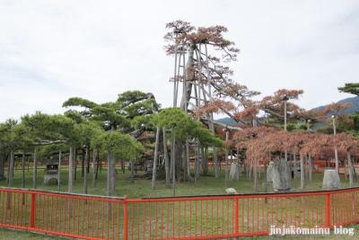 唐崎神社(大津市唐崎)10